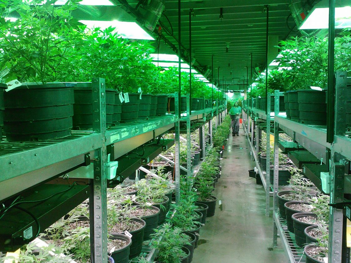 New Tech Curbs Landfills Waste from Cannabis Cultivators