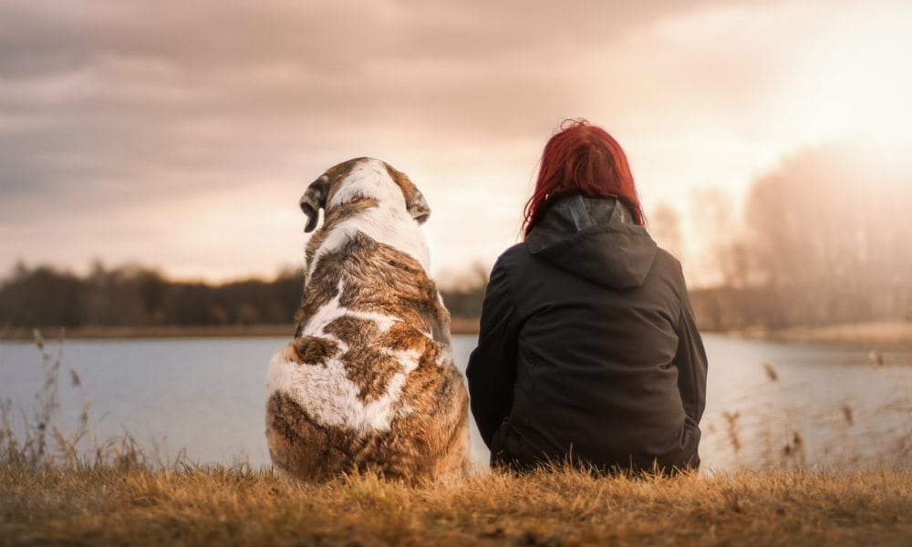 Sick Pets and What New Research Says May Help (Spoiler: It's CBD)