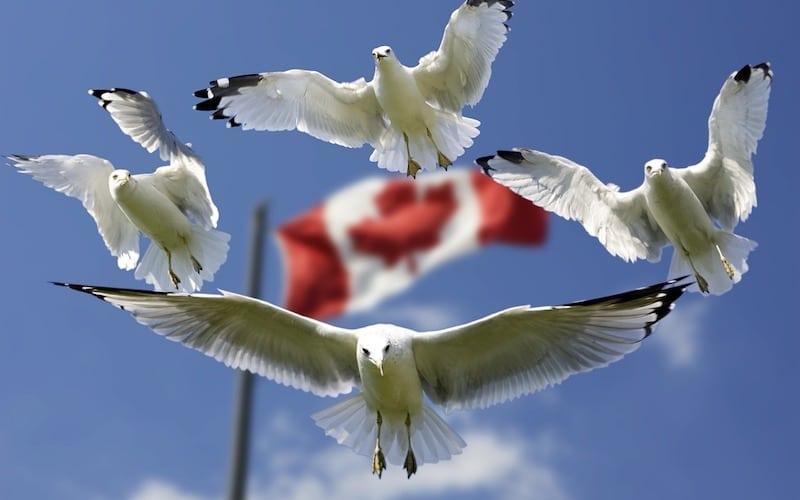 UPDATE: Canadian Entrepreneurs Risk Lifetime Ban from U.S.