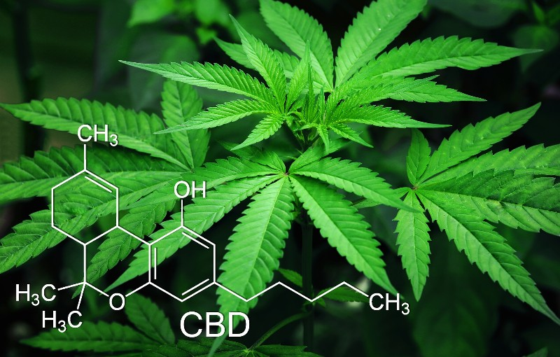 CBD is a compound derived from the cannabis plant. Image courtesy of Pixabay.