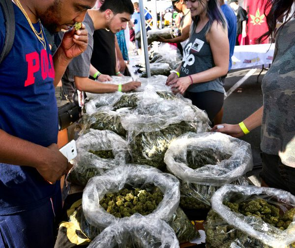 """In this Oct. 20, 2018, file photo, a customer takes a sniff test from the selection of marijuana strains at Miyagi LA booth at the cannabis-themed Kushstock Festival at Adelanto, Calif. When California voters broadly legalized marijuana in 2016, they were promised that part of the tax revenue from pot sales would be devoted to programs to teach youth how to avoid substance abuse and """"prevent harm"""" from marijuana use. But more than a year after the start of sales, there's no money for those programs and looming questions about how they might operate in the future. (AP Photo/Richard Vogel, File)"""