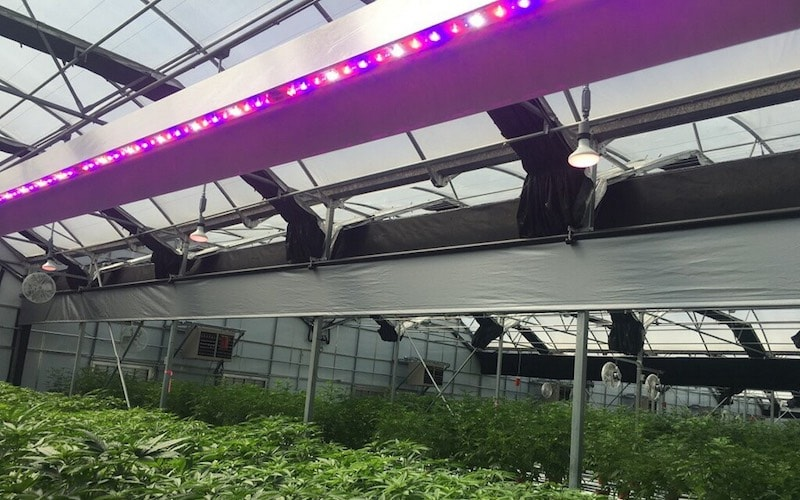 The Future of Grow House Lighting Technology