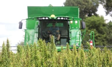 Kentucky Hemp Sales Surged in 2018