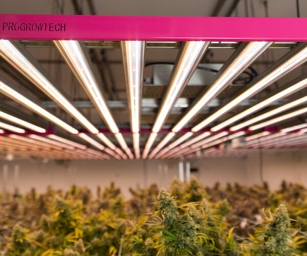 led lighting cannabis