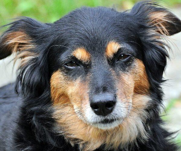 Should your dog consume CBD? Image courtesy of Pixabay.