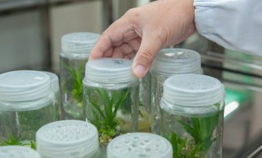 How Do Micropropagation and Molecular Biology Relate to Cannabis?