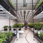 Key Considerations When Expanding Your Indoor Grow Facility