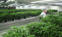 Solving the 3 Biggest HVAC Challenges of Modern Day Grow Rooms