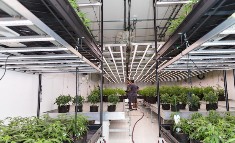 How Surna is Providing Complete HVAC Solutions from Seed to Harvest