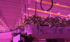 How LumiGrow Implements AI in Their Lighting Technology