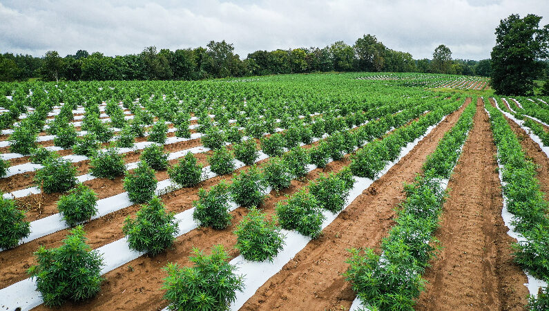 Disruptive Technology Promises to Help Producers Meet Demand