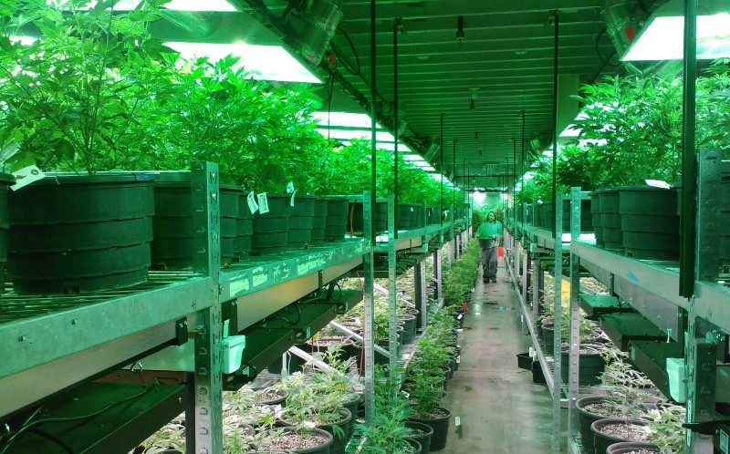 Cannabis Industry Continues to Adapt During Coronavirus Crisis