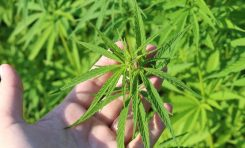 Green Buffalo LLC Founder Sean Byrne Wants You To Grow Your Own Hemp