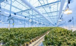What's Better: Indoor Cultivation or Greenhouse Operations?