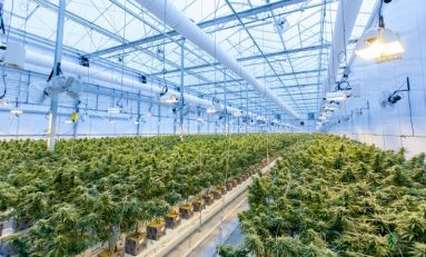 Business Opportunity: Cannabis Odor Control Technology