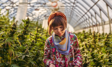 CBD Pioneer Charlotte's Web Earns B Corporation Certification