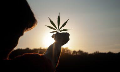 New Zealanders Finally Vote On Cannabis Legalization