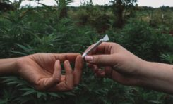 The Path To Organic For The Marijuana Industry
