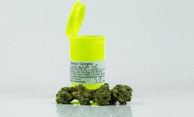 Twenty Percent Of Surveyed Cancer Patients Report Using Cannabis