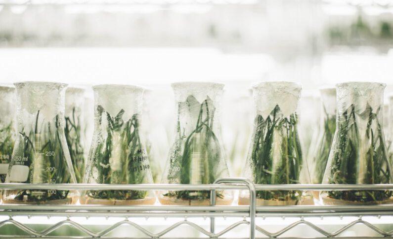 Terpene Profiles May Shape the Future of Cannabis