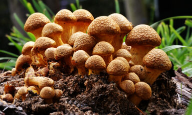 Calif. Psychedelics Decriminalization Bill Passes First Committee