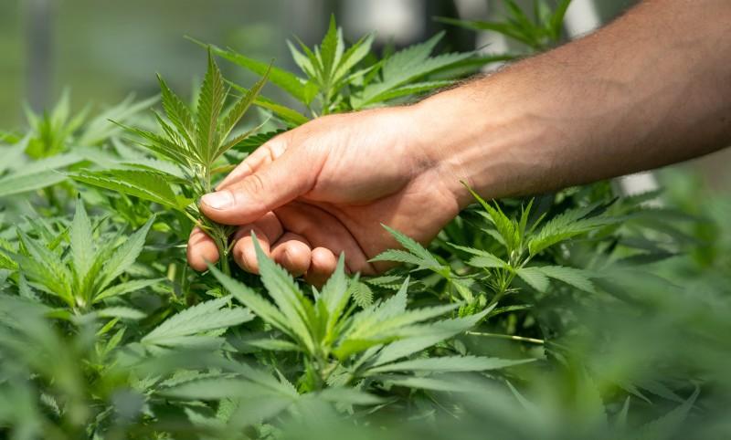 North Carolina Legislators Propose Bill to Legalize Marijuana