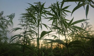 Different Ways Hemp Can be Utilized as House-Building Materials