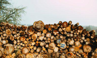 Increasing Global Lumber Prices May Help Hemp Industry