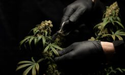 Quick Hits: The Week in Cannabis