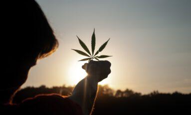 This Week in Cannabis News