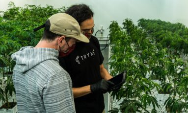 Touchless Automation is Streamlining Cannabis Production & Compliance