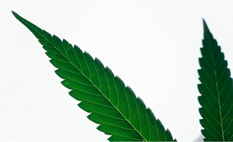 Quick Hits: More States Legalize Cannabis
