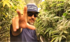 How to Transform Your Grow with B-Real's THC Controls