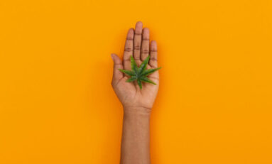 The Important Role of Social Equity in Cannabis Hiring