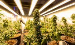 Sustainable cannabis is possible. A new event offers solutions.