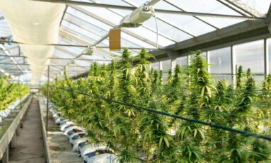 How Smart Technology is Creating Profits for Cannabis Growers