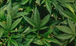 First Medical Cannabis Prescription Issued in South Africa