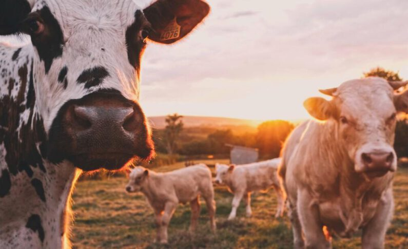 How a Versatile Cow Byproduct Could Fuel a New Generation of Farmers