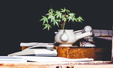 Prohibiting Cannabis Cultivation In A Legal Country