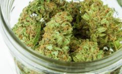 If Cannabis Strain Names Were Correct and Not Utterly Bizarre