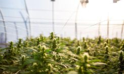 California Governor Signs Bill to Legalize Hemp in Food and Supplements